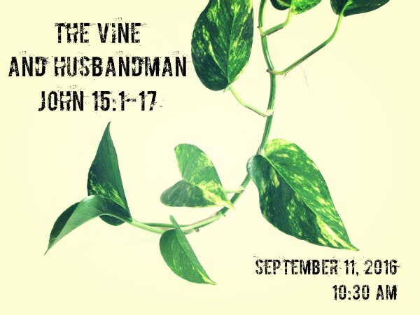 the-vine-and-husbandman